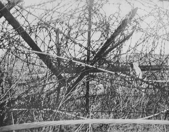 Electric fences the western front great war forum